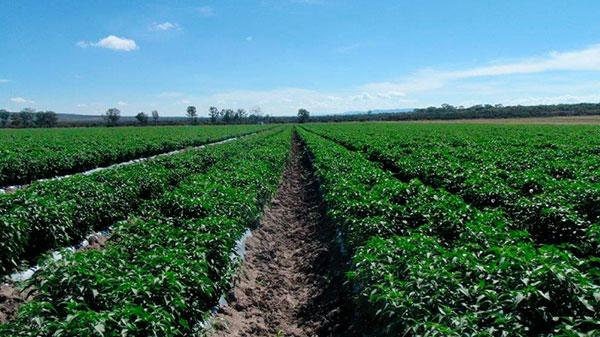 campo de hortalizas
