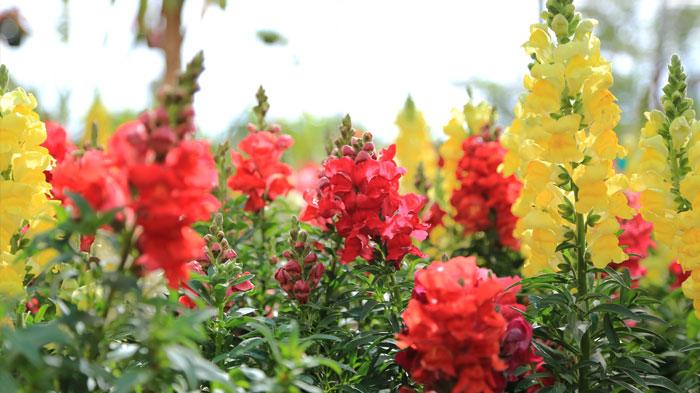 cultivo-ornamental