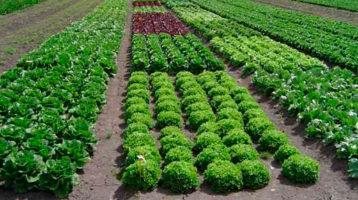 fertilizantes para cultivos frutales
