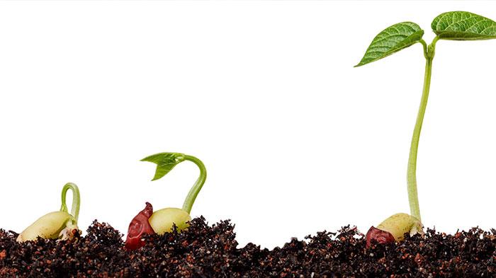 plantas-en-tierra-fondo-blanco